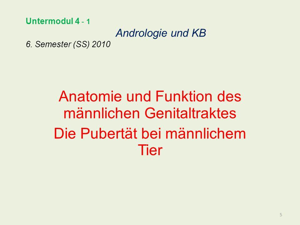 Untermodul 4 - 1 Andrologie und KB 6. Semester (SS) 2010