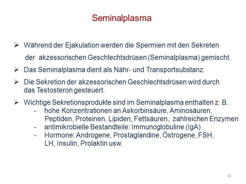 Seminalplasma Während der Ejakulation werden die Spermien mit den Sekreten. der akzessorischen Geschlechtsdrüsen (Seminalplasma) gemischt.