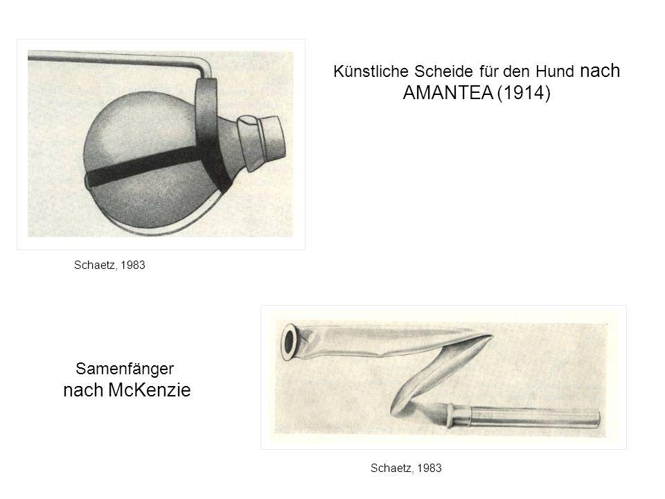 Künstliche Scheide für den Hund nach AMANTEA (1914)