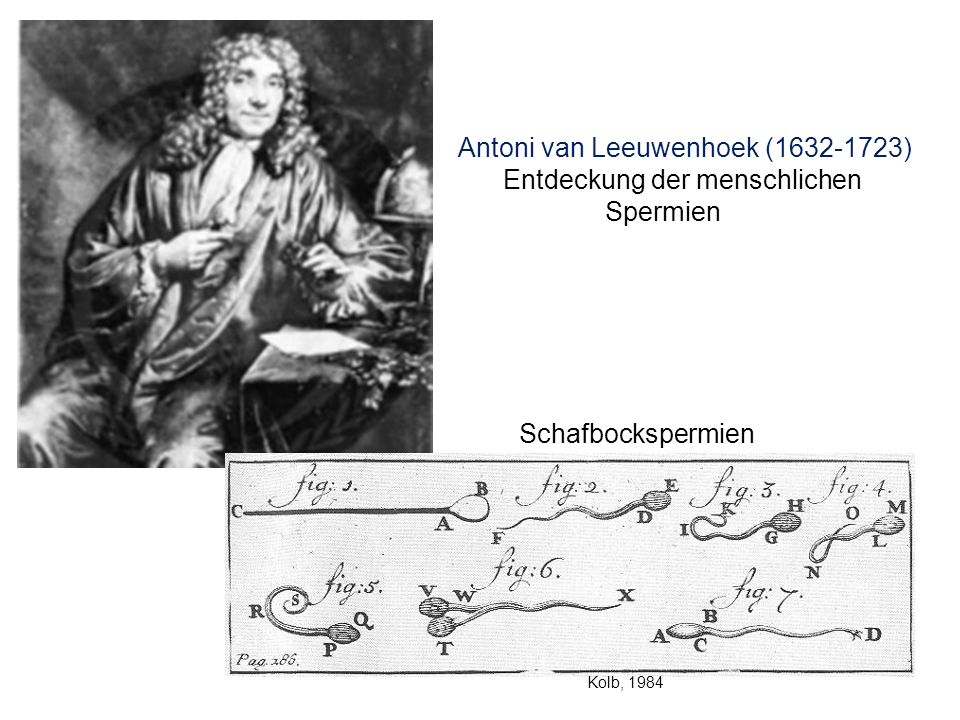 Antoni van Leeuwenhoek (1632-1723) Entdeckung der menschlichen