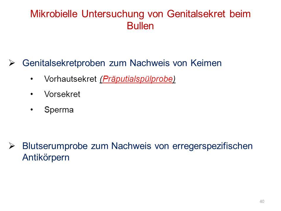 Mikrobielle Untersuchung von Genitalsekret beim Bullen