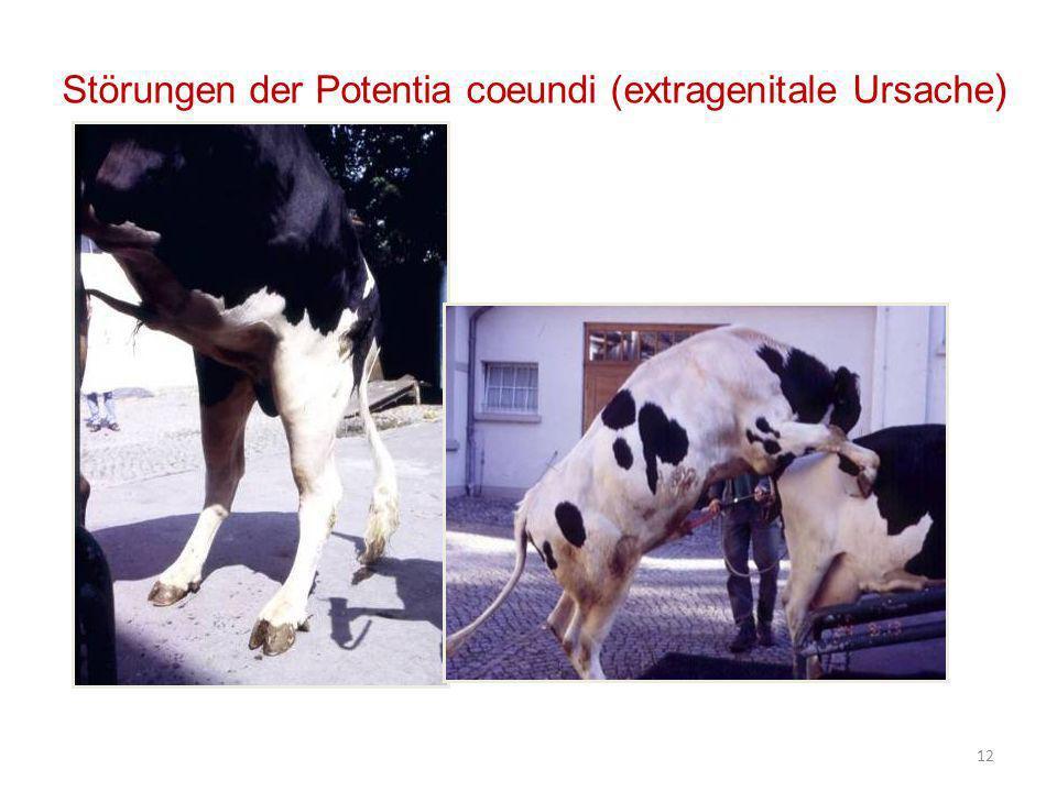 Störungen der Potentia coeundi (extragenitale Ursache)