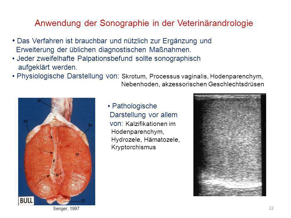 Anwendung der Sonographie in der Veterinärandrologie