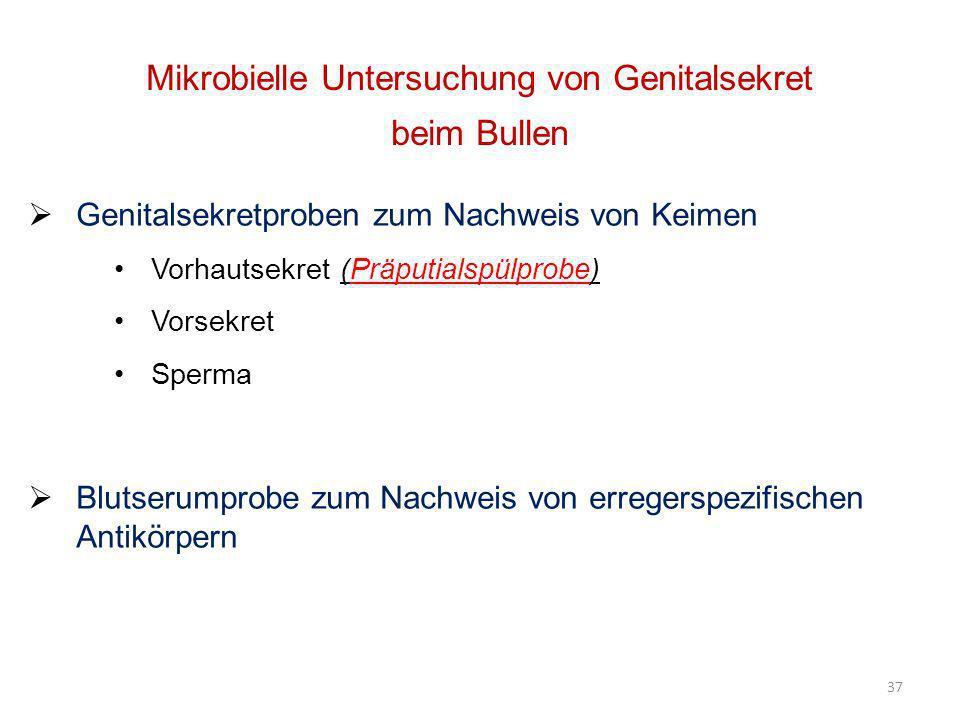 Mikrobielle Untersuchung von Genitalsekret