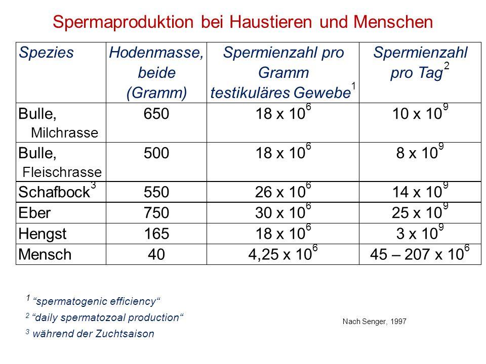 Spermaproduktion bei Haustieren und Menschen