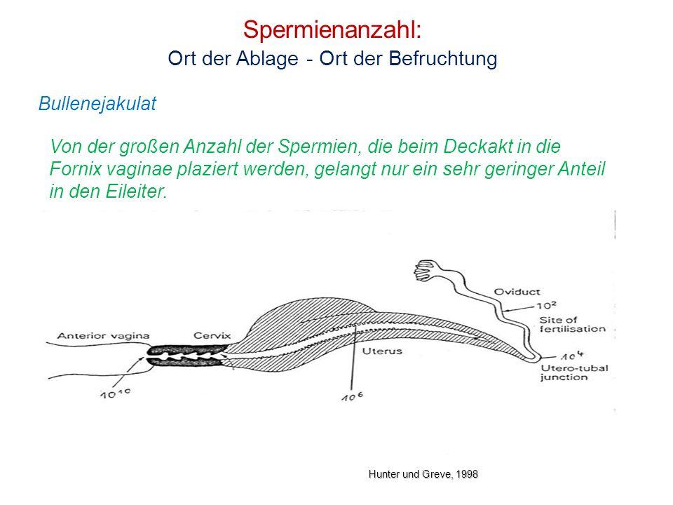 Spermienanzahl: Ort der Ablage - Ort der Befruchtung