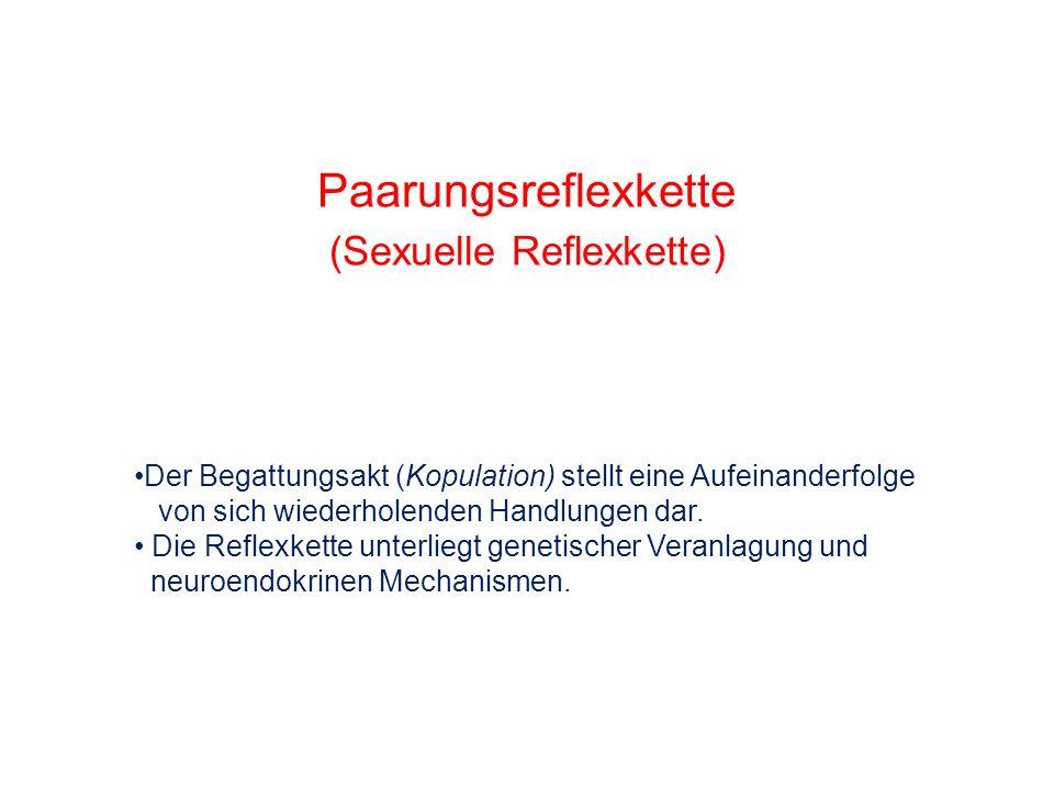 (Sexuelle Reflexkette)