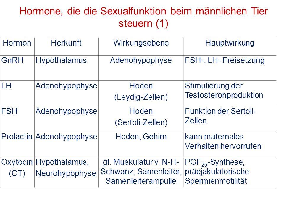 Hormone, die die Sexualfunktion beim männlichen Tier steuern (1)
