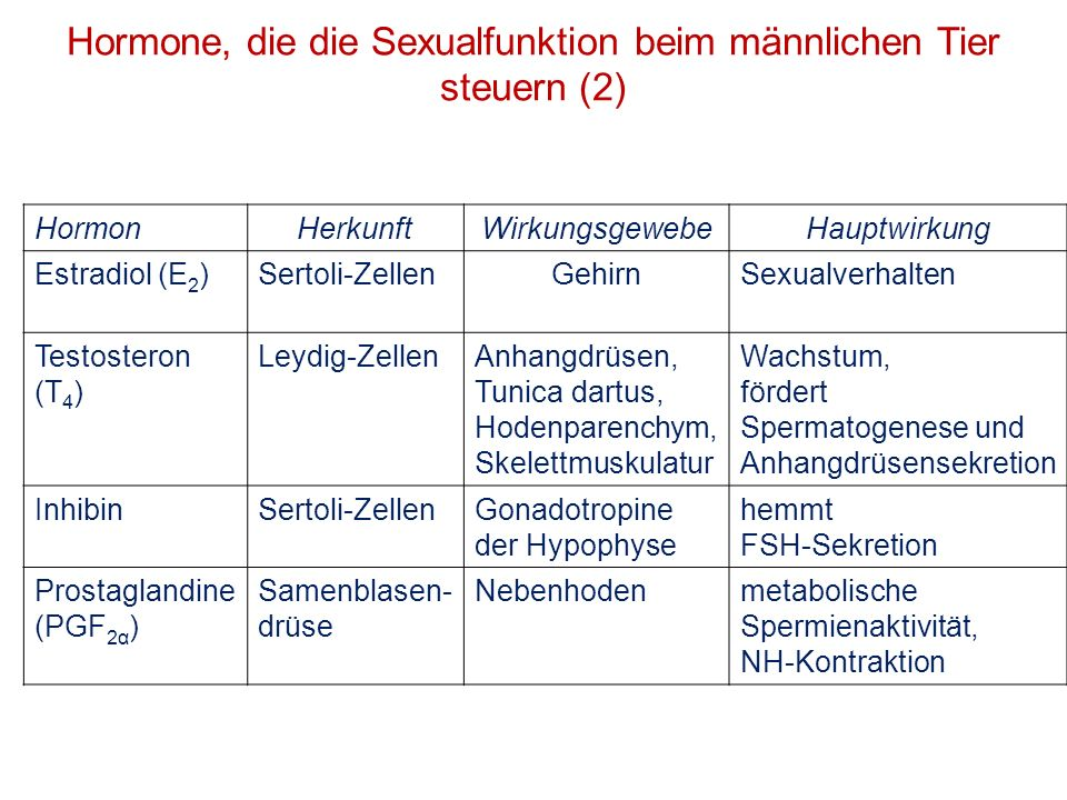 Hormone, die die Sexualfunktion beim männlichen Tier steuern (2)