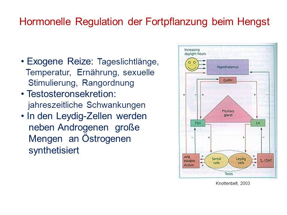 Hormonelle Regulation der Fortpflanzung beim Hengst