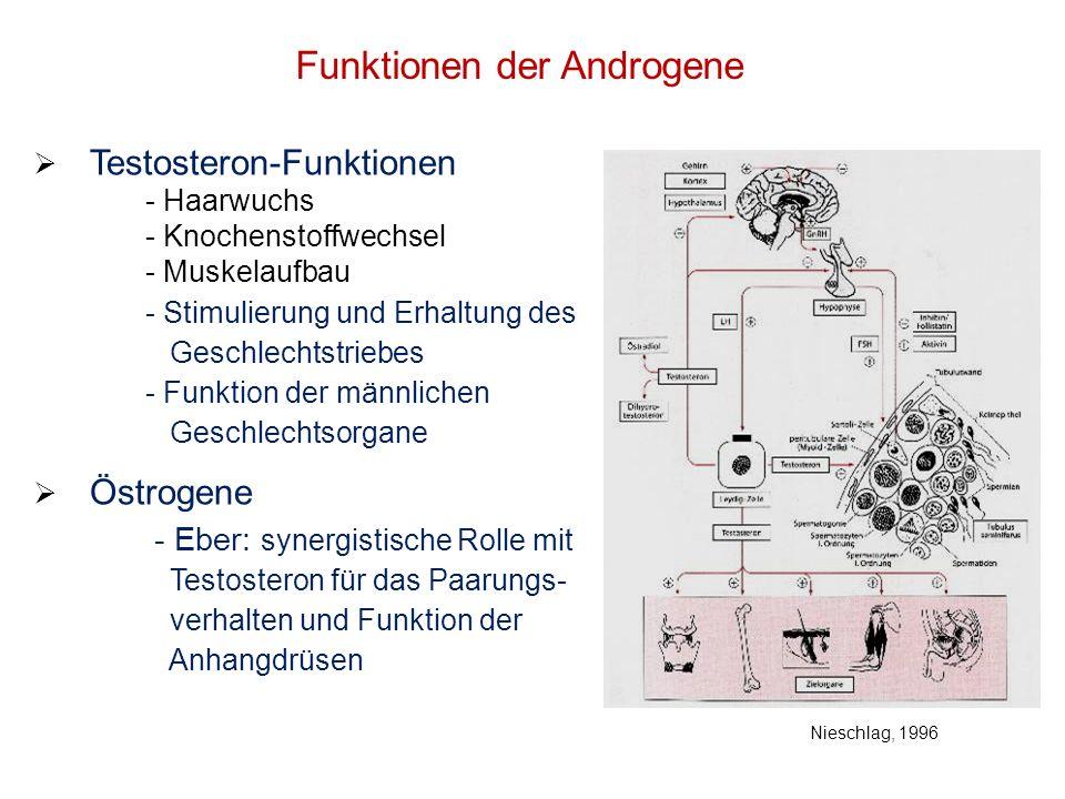Funktionen der Androgene