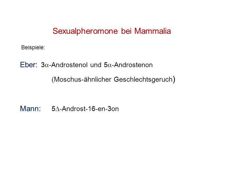 Sexualpheromone bei Mammalia