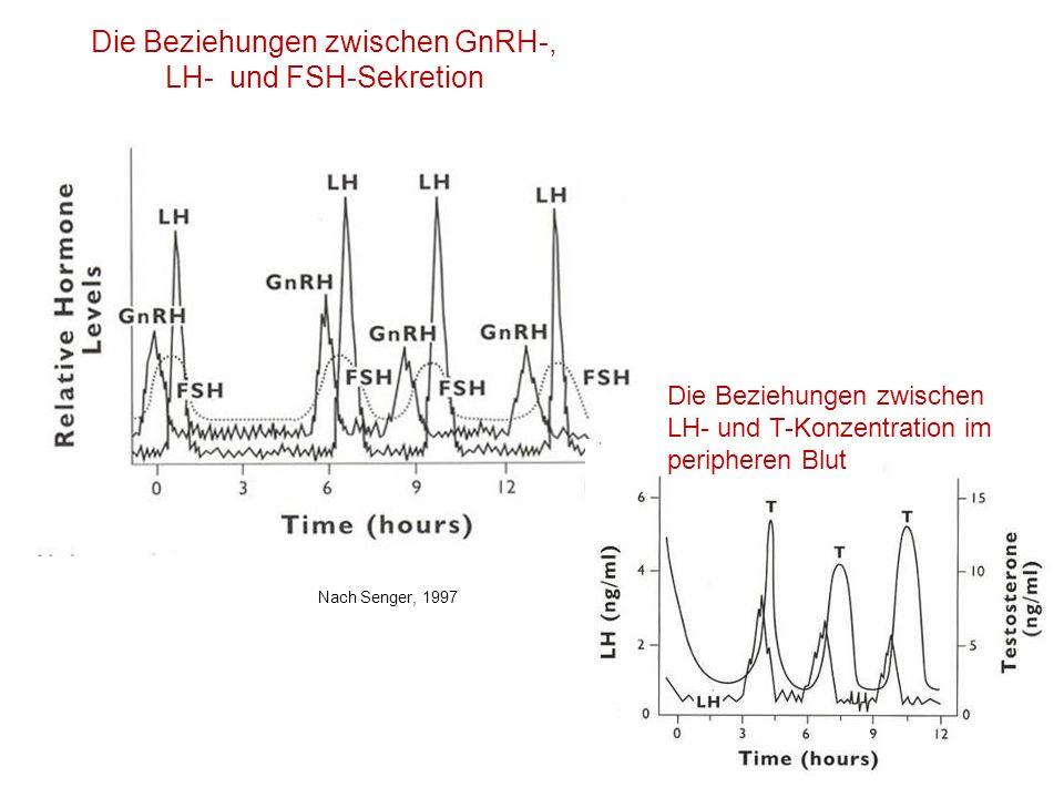 Die Beziehungen zwischen GnRH-, LH- und FSH-Sekretion