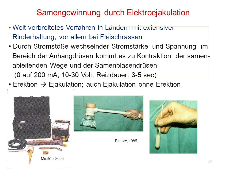 Samengewinnung durch Elektroejakulation