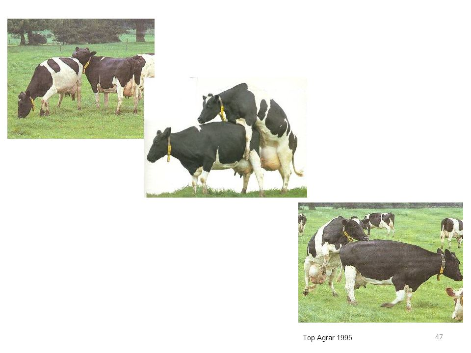 Top Agrar 1995