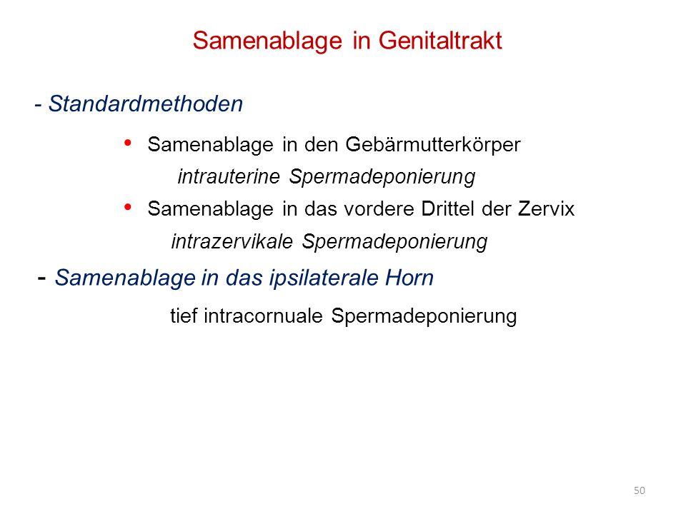 Samenablage in Genitaltrakt