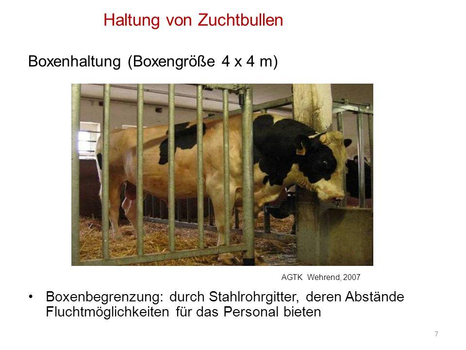 Haltung von Zuchtbullen Boxenhaltung (Boxengröße 4 x 4 m)