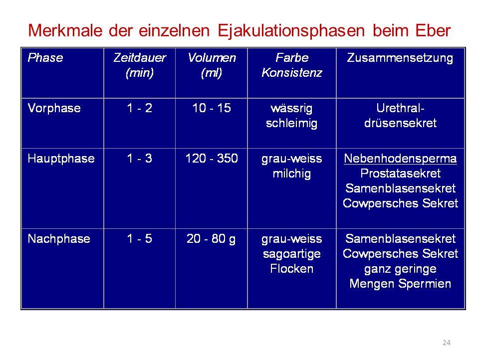 Merkmale der einzelnen Ejakulationsphasen beim Eber