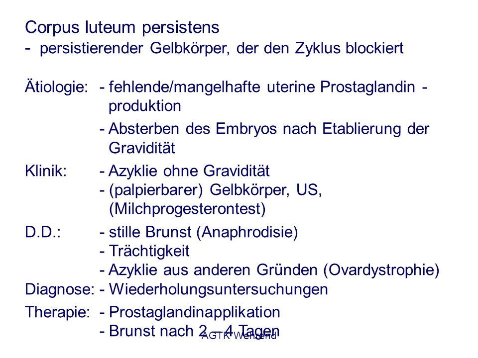 Corpus luteum persistens - persistierender Gelbkörper, der den Zyklus blockiert