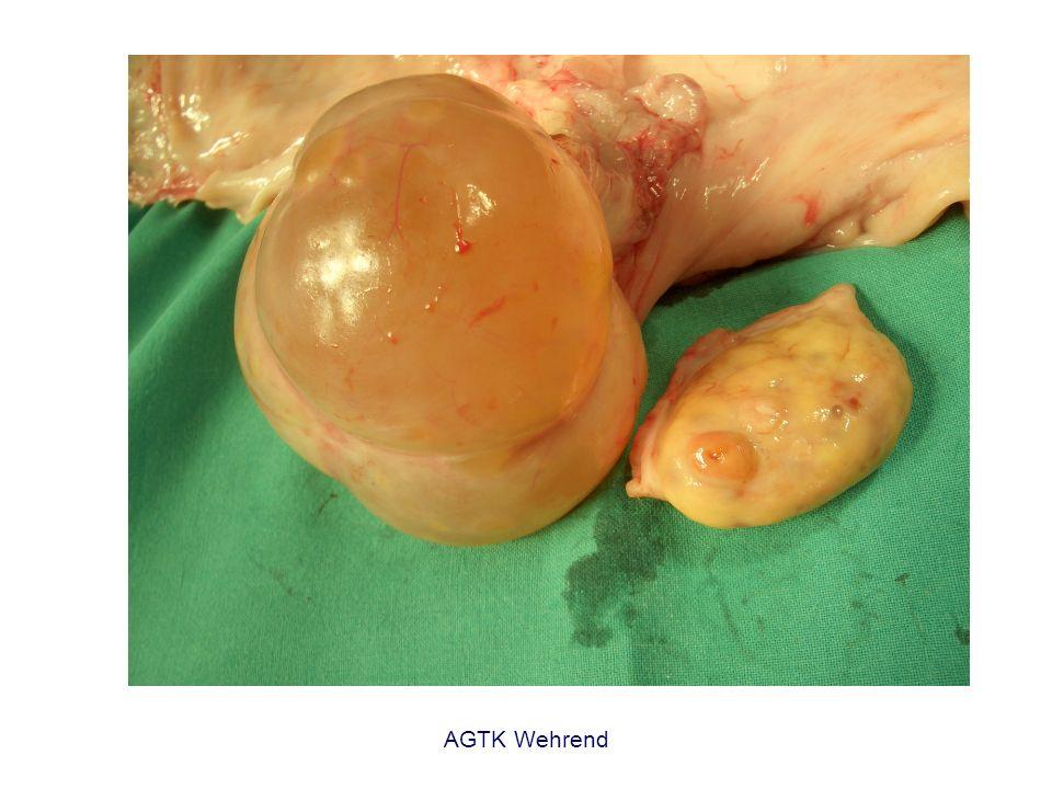 AGTK Wehrend Pubertät 6- 12 Monate, meist 10 Monate