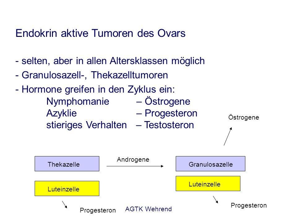 Endokrin aktive Tumoren des Ovars