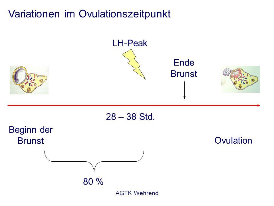 Variationen im Ovulationszeitpunkt