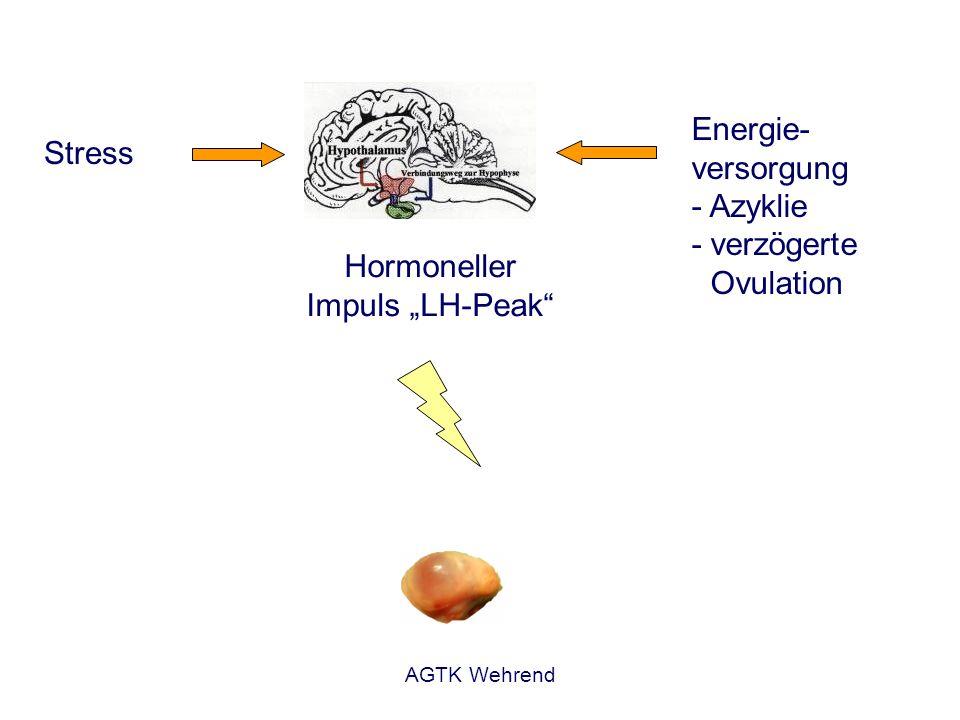 """Hormoneller Impuls """"LH-Peak"""