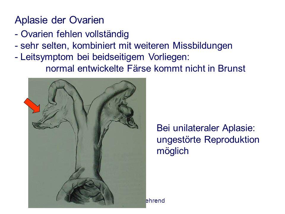Aplasie der Ovarien