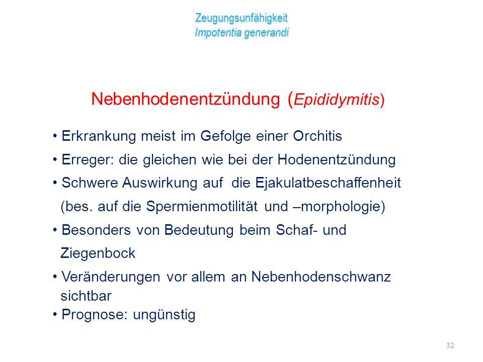 Nebenhodenentzündung (Epididymitis)