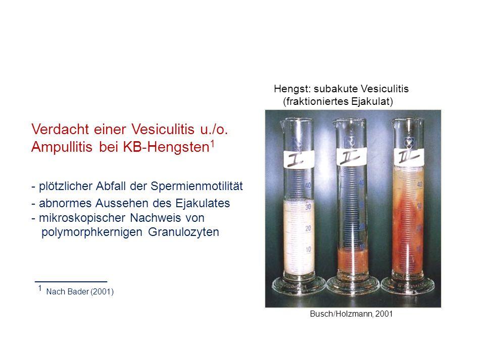 Verdacht einer Vesiculitis u./o. Ampullitis bei KB-Hengsten1