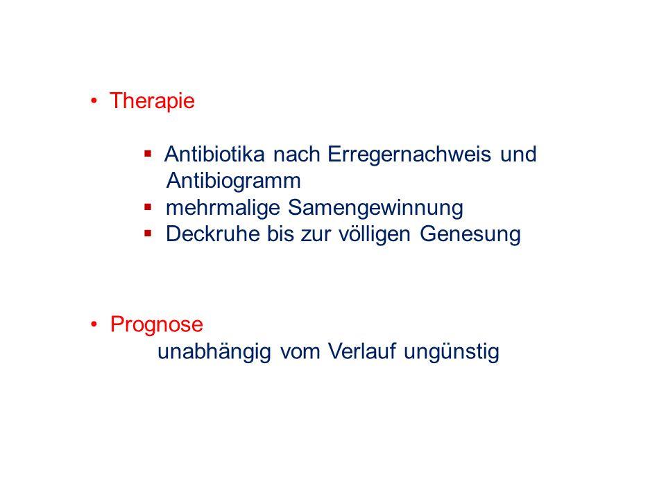 Therapie Antibiotika nach Erregernachweis und. Antibiogramm. mehrmalige Samengewinnung. Deckruhe bis zur völligen Genesung.
