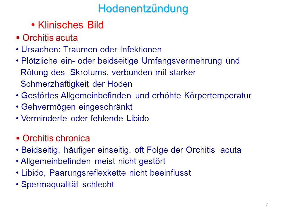 Hodenentzündung Klinisches Bild Orchitis acuta