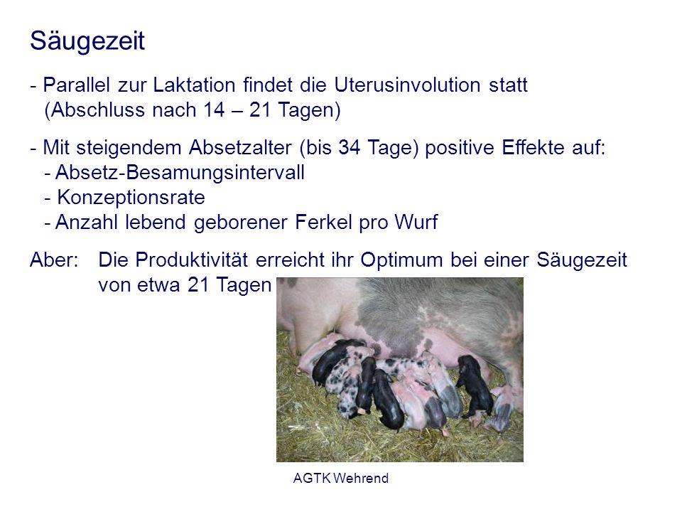 Säugezeit Parallel zur Laktation findet die Uterusinvolution statt (Abschluss nach 14 – 21 Tagen)