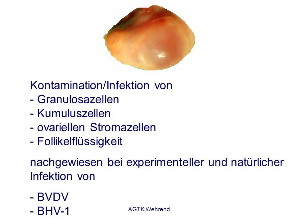 nachgewiesen bei experimenteller und natürlicher Infektion von