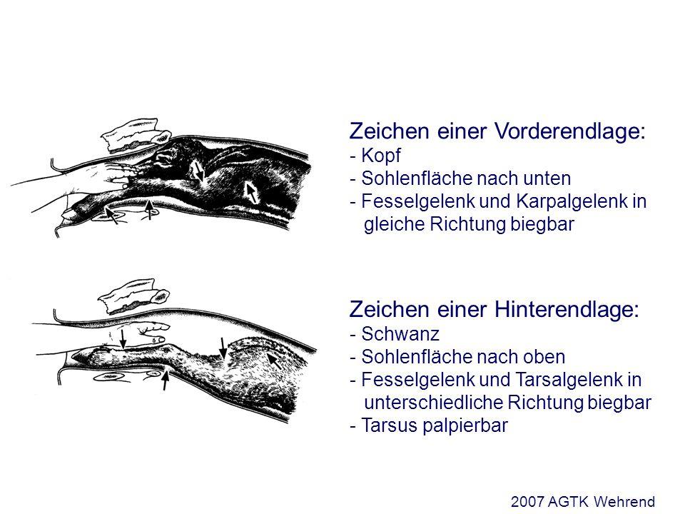 Zeichen einer Vorderendlage: - Kopf - Sohlenfläche nach unten - Fesselgelenk und Karpalgelenk in gleiche Richtung biegbar