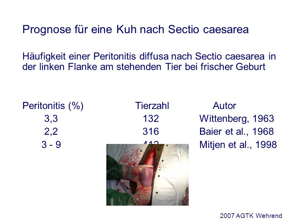 Prognose für eine Kuh nach Sectio caesarea