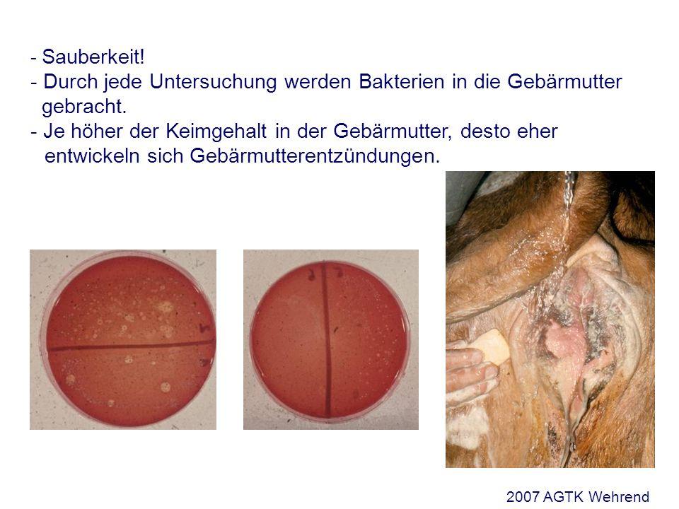 Sauberkeit! - Durch jede Untersuchung werden Bakterien in die Gebärmutter gebracht. - Je höher der Keimgehalt in der Gebärmutter, desto eher entwickeln sich Gebärmutterentzündungen.