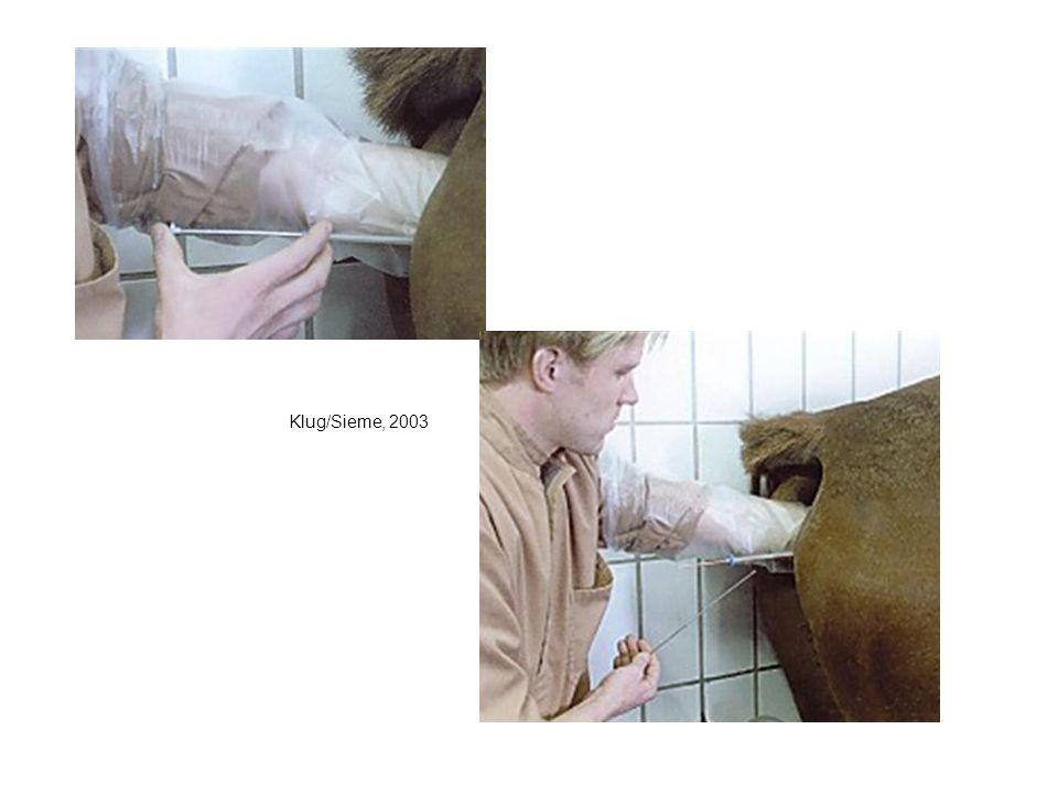 Klug/Sieme, 2003