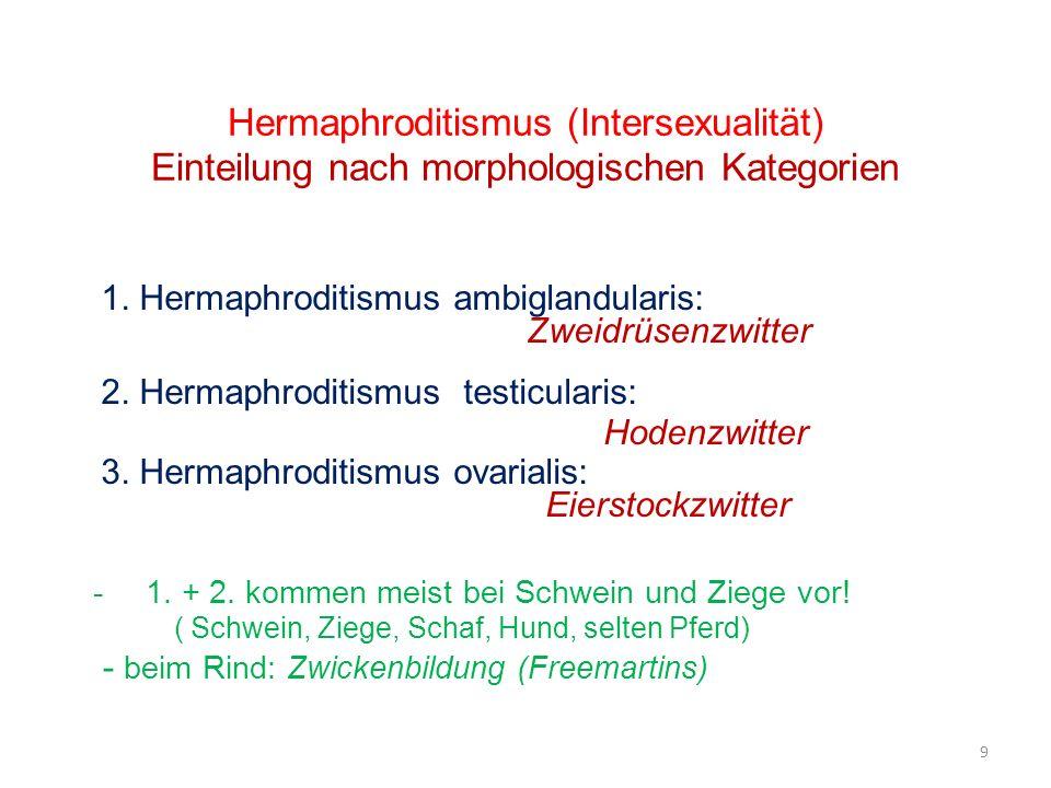 Hermaphroditismus (Intersexualität) Einteilung nach morphologischen Kategorien