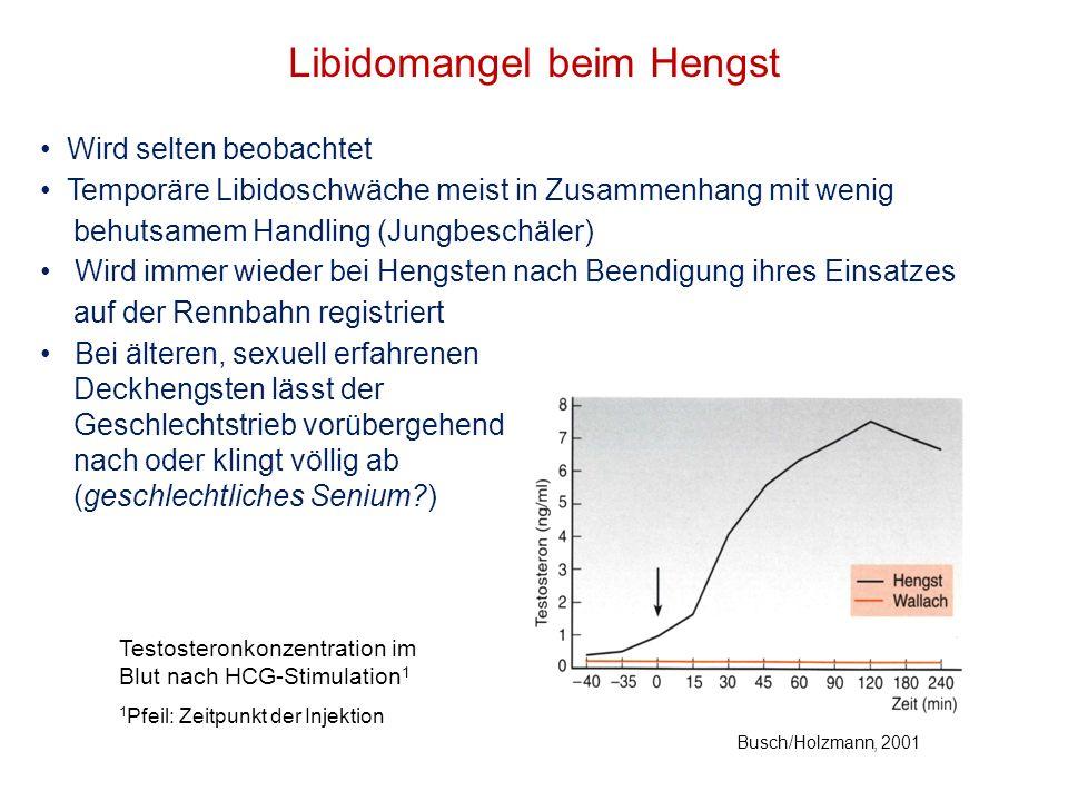 Libidomangel beim Hengst