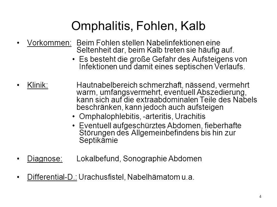 Omphalitis, Fohlen, Kalb