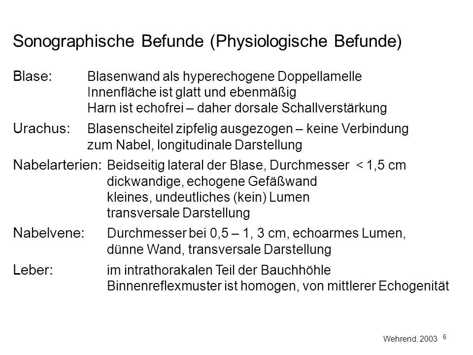 Sonographische Befunde (Physiologische Befunde)