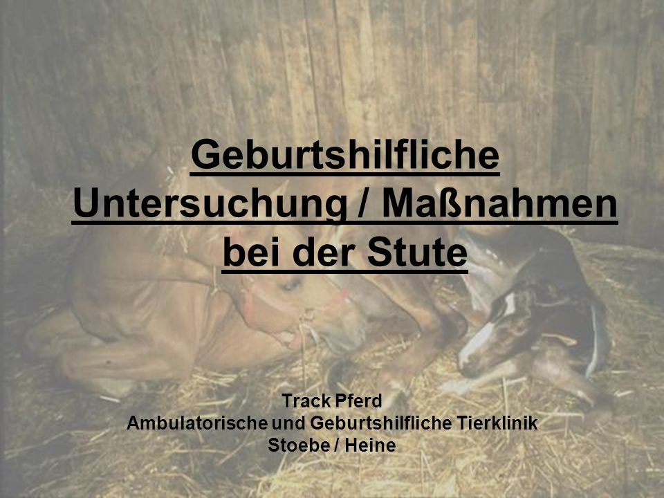 Geburtshilfliche Untersuchung / Maßnahmen bei der Stute