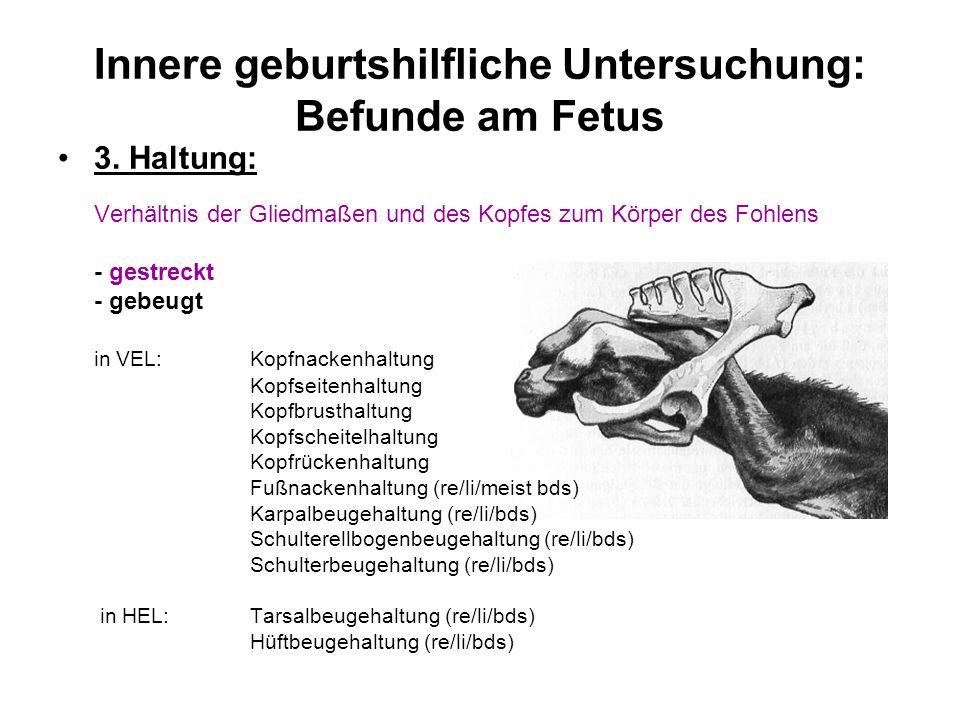Innere geburtshilfliche Untersuchung: Befunde am Fetus