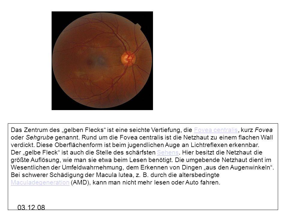 """Das Zentrum des """"gelben Flecks ist eine seichte Vertiefung, die Fovea centralis, kurz Fovea oder Sehgrube genannt. Rund um die Fovea centralis ist die Netzhaut zu einem flachen Wall verdickt. Diese Oberflächenform ist beim jugendlichen Auge an Lichtreflexen erkennbar."""