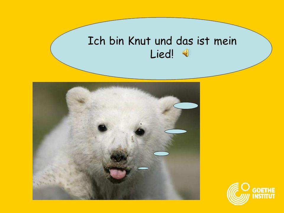 Ich bin Knut und das ist mein Lied!