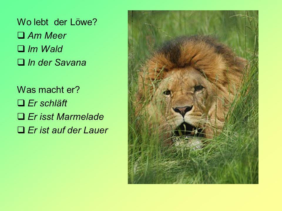 Wo lebt der Löwe Am Meer. Im Wald. In der Savana. Was macht er Er schläft. Er isst Marmelade.