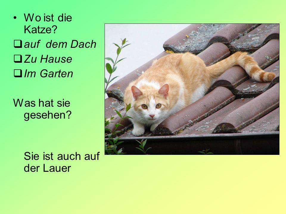 Wo ist die Katze auf dem Dach Zu Hause Im Garten Was hat sie gesehen Sie ist auch auf der Lauer