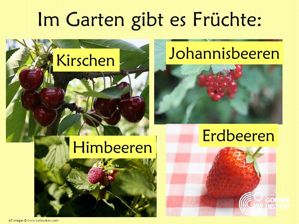 Im Garten gibt es Früchte: