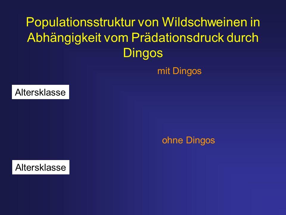 Populationsstruktur von Wildschweinen in Abhängigkeit vom Prädationsdruck durch Dingos